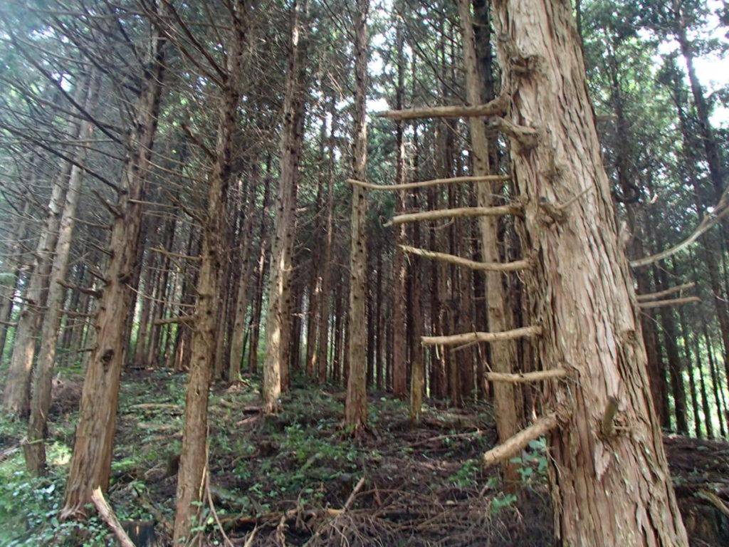 未整備の人工林