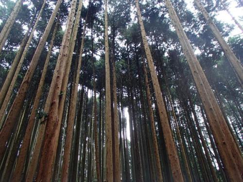 kanbatsu beer brewing for nature 1 126