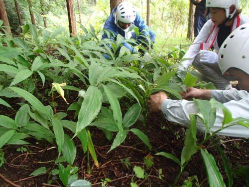 kanbatsu beer brewing for nature 1 267